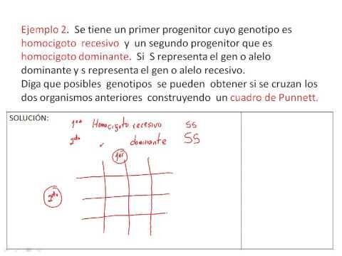 CUADRO DE PUNNETT (2)