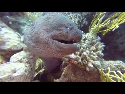 Red Sea Wrecks