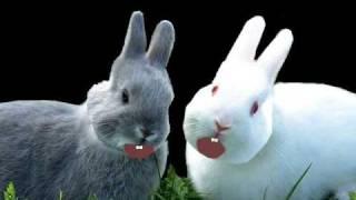 R e n a t o F e c h i n e - B e b e N e g ã o - cachorro,coelho e gato - cantando e dançando