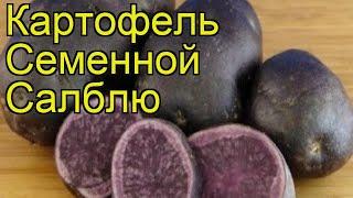 Картофель семенной Салблю. Краткий обзор, описание характеристик, где купить картофель Salblue