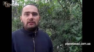 видео Виды газонов: обыкновенный газон, цветущий, рулонный газон