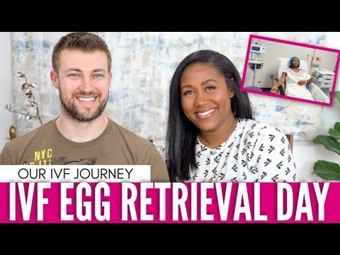 IVF Egg Retrieval And Embryo Results - Our  IVF Journey #3