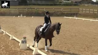 LB1 Hest