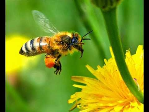BEES IN GLOBAL EXTINCTION! - Confirmation of the UN - World Food Crisis!