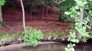 Relax Video Германия прекрасная природа
