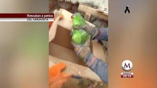 Rescatan a perico que estaba entre escombros en Lindavista