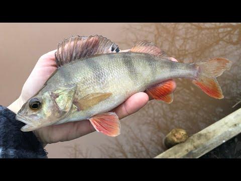 Coarse Fishing In Winter - Perch Fishing - Spires Lakes Devon