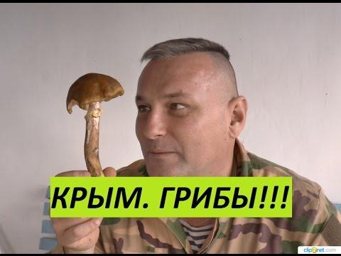 Крым. Грибы в ноябре. Разбор. thumbnail