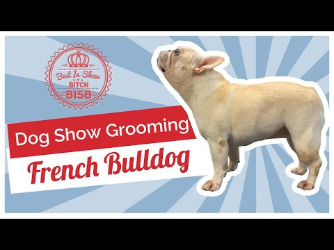Dog Show Grooming: How To Groom a French Bulldog
