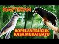 Masteran Trucuk Rasa Murai Batu Cocok Untuk Trucuk Bakalan  Mp3 - Mp4 Download