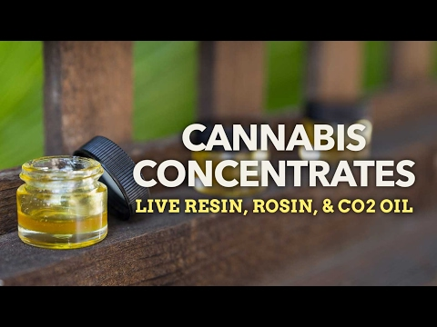 Cannabis Concentrates The Art of Extraction