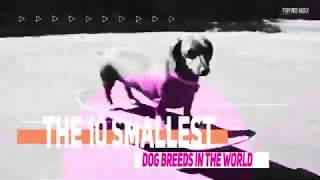Small dogs in the world