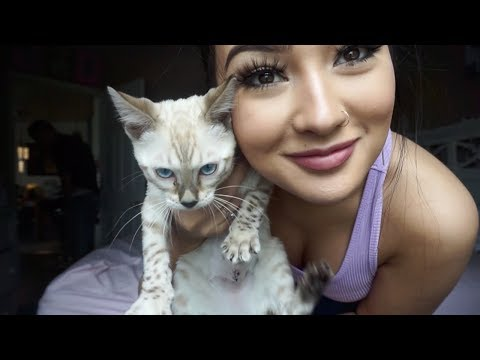 GETTING MY NEW KITTY AND LIP INJECTIONS!   Weekly Vlog