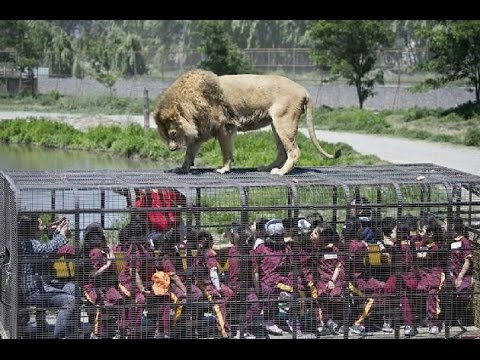 LION SAFARI AT VENKATESHWARA ZOO PARK TIRUPATI