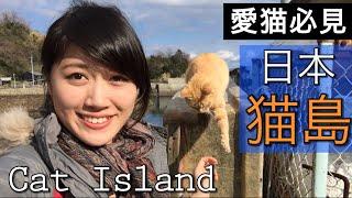日本「貓島」|島民15人,貓100匹 (青島)|推薦|愛媛【Mao去旅遊】|MaoMaoTV