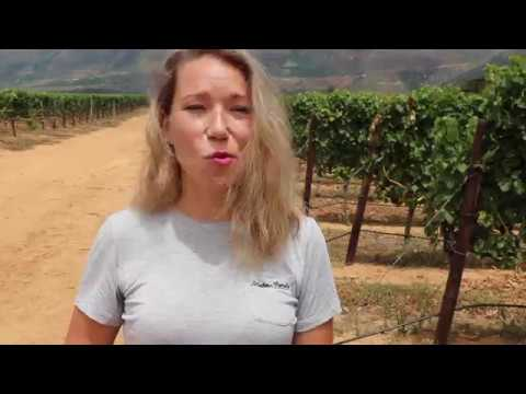 Looking At Organic Farming - Spier