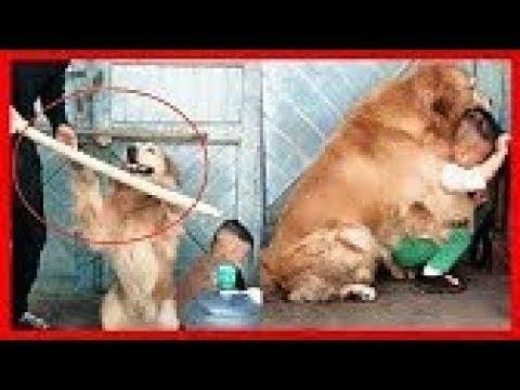 كلاب أنقذت حياة البشر لو لم تصورهم الكاميرات لما صدقهم أحد