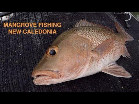 Pêche Au Leurre Dans La Mangrove Nouvelle Calédonie Mangrove Fishing New Caledonia