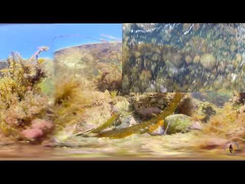False Point Tide Pools