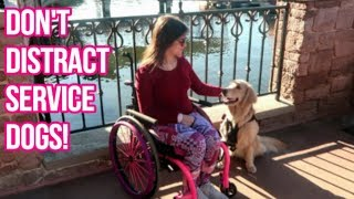 🐶 Service Dog at Disney: STOP PULLING HER TAIL! 😤(12/6/18)