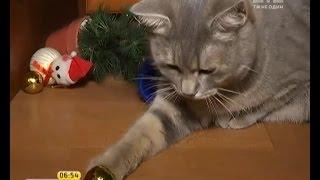 як зробити модульне орігамі кішка
