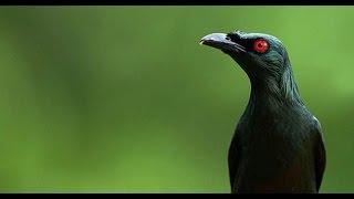 [Miris] Ratusan Burung Cucak Keling Asli Sumatra Disimpan dibagasi BUS