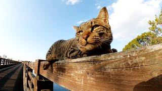 モノレール猫臨海線!?橋の欄干に登ってくつろぐキジトラ猫