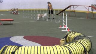 "Jamaica - Fox Valley Dog Training Club 9-14-13 Masters Standard 20"" Regular"