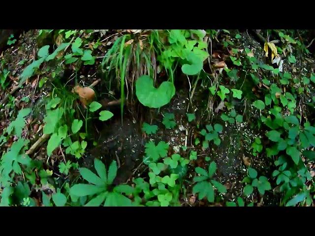Kleiner Sonnstein - GoPro Actioncam - Urlaub im Salzkammergut