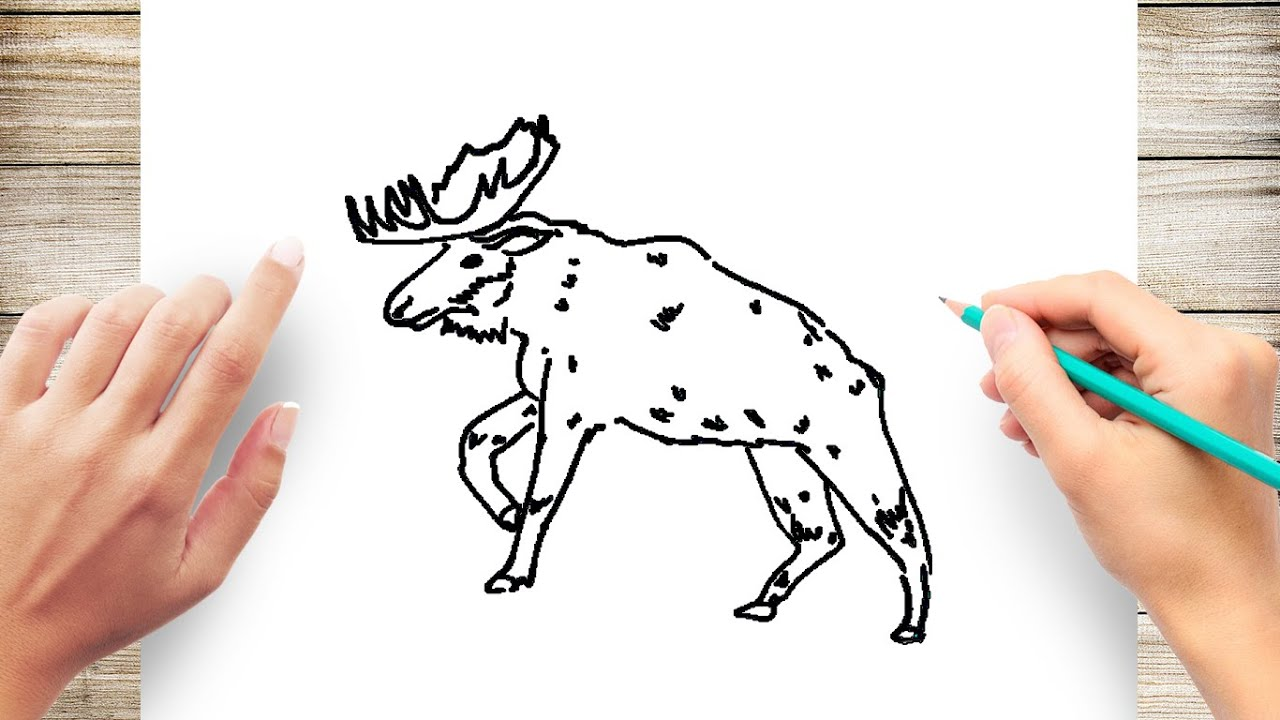 How to draw moose step by step easy for kids youtube how to draw moose step by step easy for kids thecheapjerseys Images