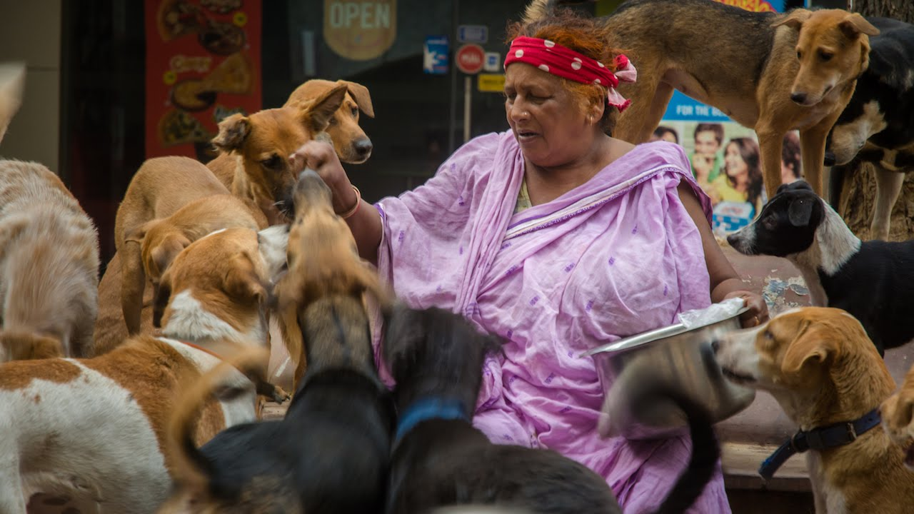 Puppy Love: The 'Dog Lady Of New Delhi' Cares For 400 Strays
