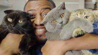 هذي حياتي مع ٣ قطط في شقتي