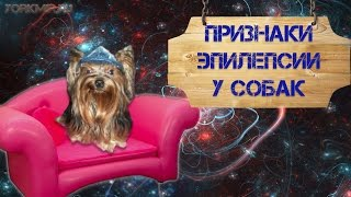 Признаки эпилепсии у собак | Виды приступов.(, 2015-11-07T09:29:06.000Z)