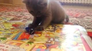 Ксюша с котятами не детские игры кошка кошка и котята