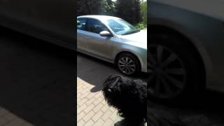 Собака Сталина страшное животное