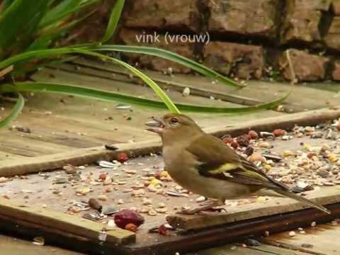 29 soorten vogels in de tuin youtube