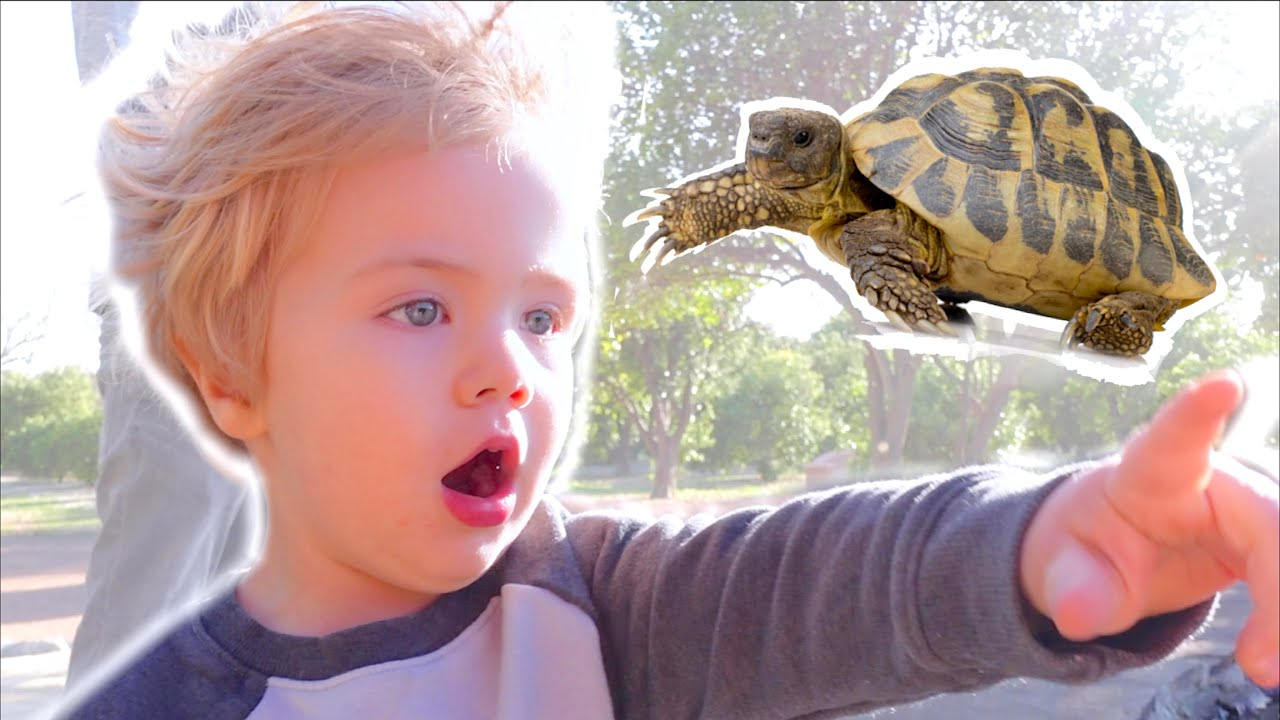 Flynn Freaks Out over Turtles!