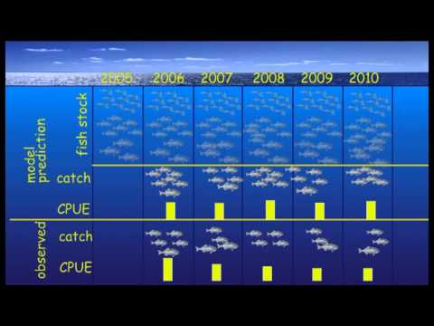 Fisheries Stock Assessment Modelling Video 10 - Opening The Black Box