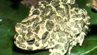 Grolier Knowledge Explorer: Animal World