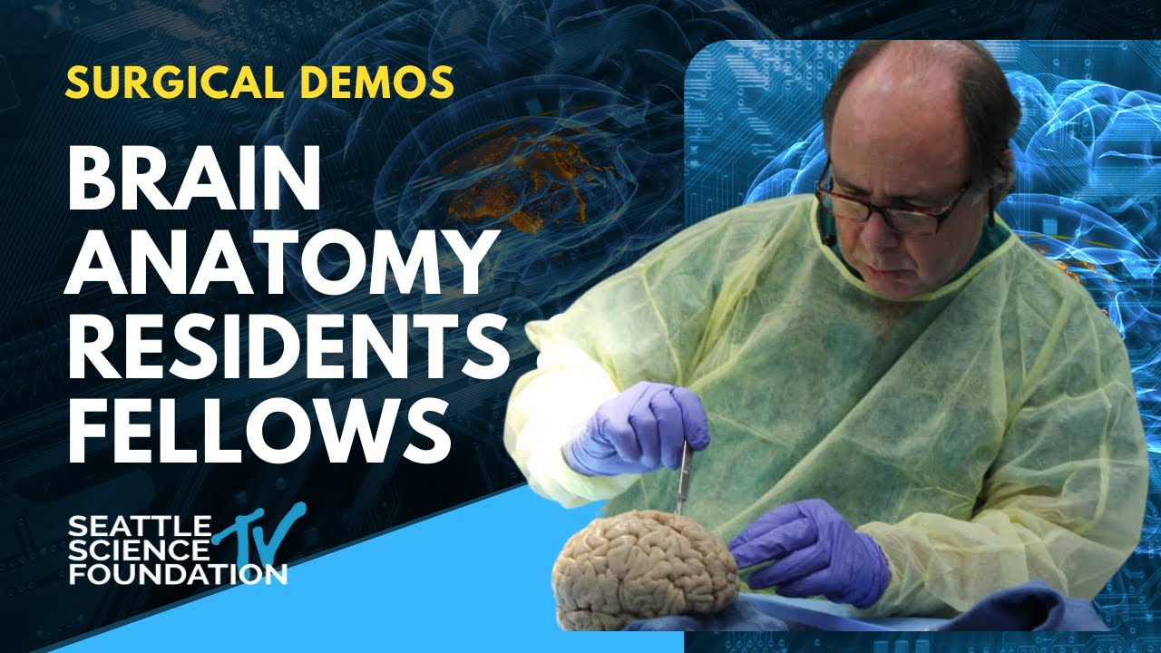 Download 11th Annual Brain Anatomy Review Introduction - Rod Oskouian, Jr , MD
