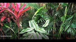 Tropical Landscaping Plants Available In The Philippines