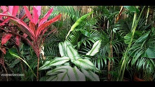 Gambar cover Tropical Landscaping Plants Available In The Philippines