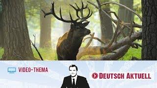 Überleben in der Wildnis | Deutsch lernen mit Videos