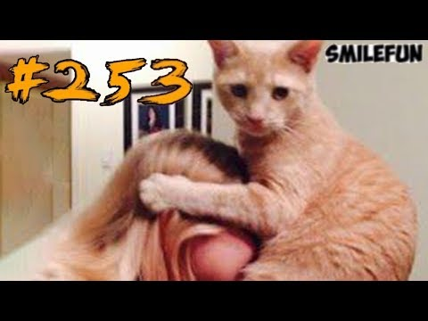 2019   2019      Funny Cats  253