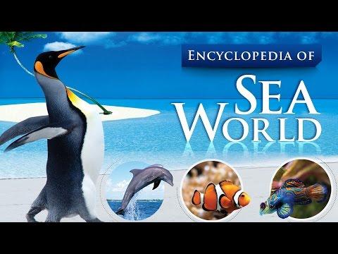 Encyclopedia of sea world || Sea World HD Videos || Sea Animals Under the Sea