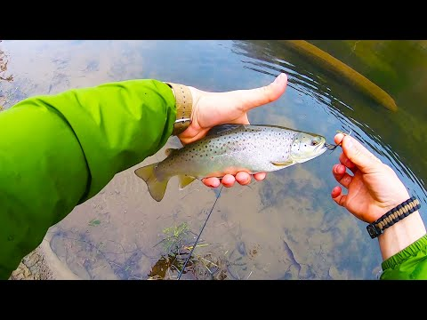 WEST BRANCH Delaware River (PA Wild Brown & Wild Rainbow Trout)