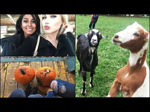 VLOG | ATTACKED BY GOATS!! Pumpkin Patch  ft. Shy
