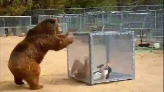 Grizzly Japanese Game Show