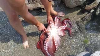 Как мы поймали осьминога