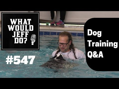stop-dog-jumping-|-dog-attacks-strangers-|-what-would-jeff-do?-dog-training-q-&-a-#547